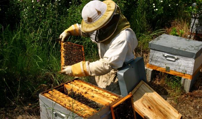 apiculteur offre emploi