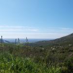 paysage printemps asphodèle