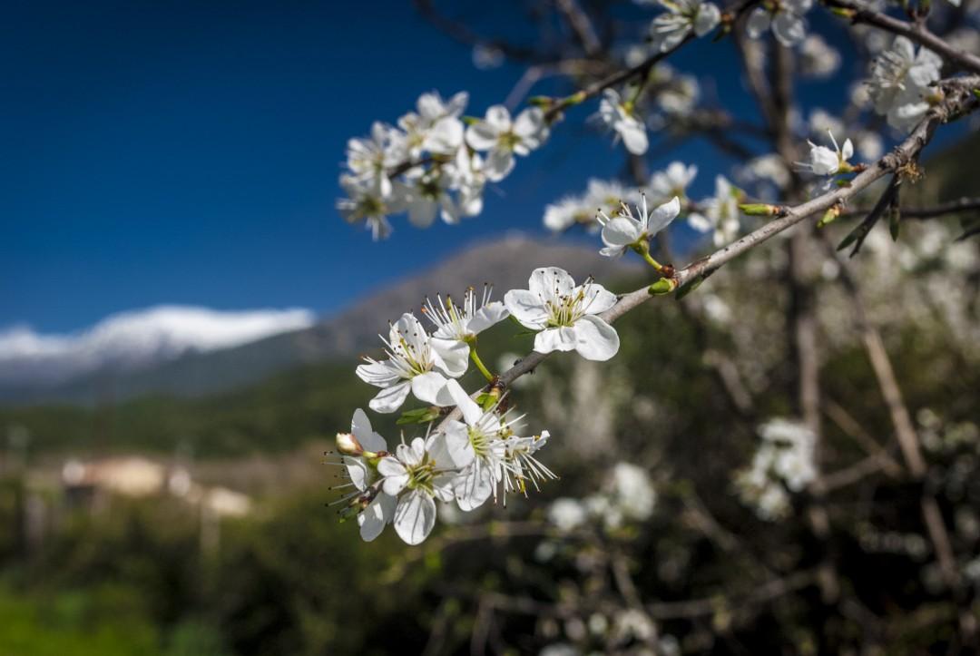 paisaje y flor