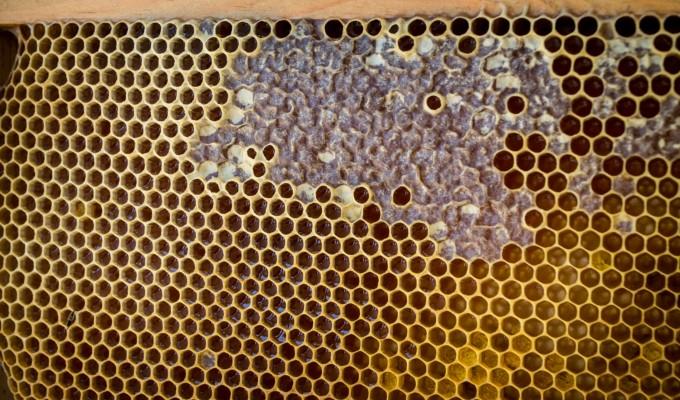 miel operculé,liquide ou cristallisé