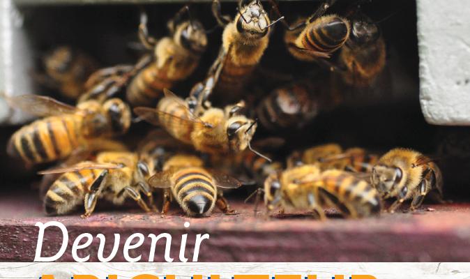couv-devenir-api-pro